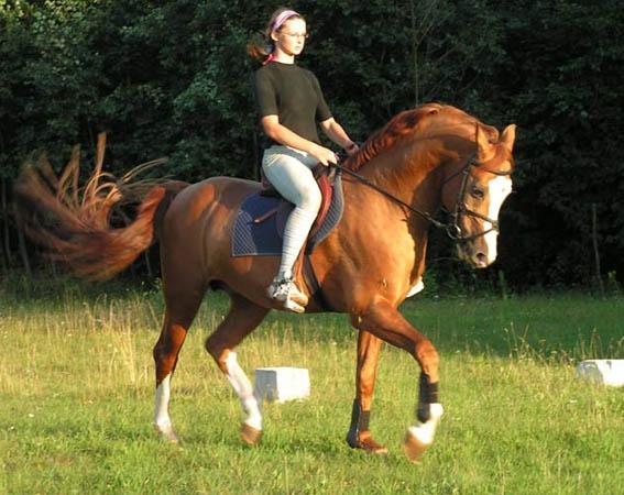 Донские лошади при выведении