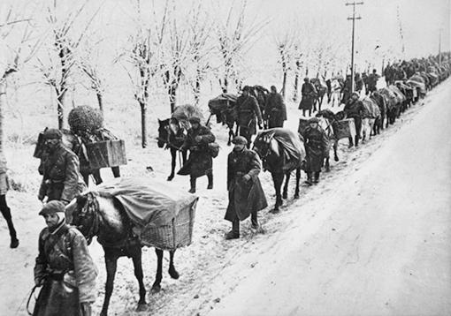 Лошади вьючные под Севастополем