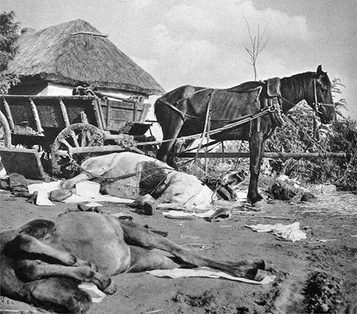 Жизнь лошадей на войне была не долгой