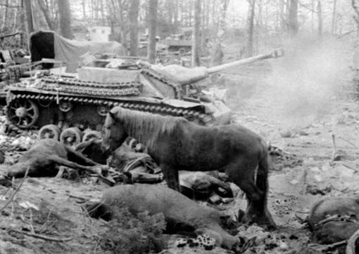 Лошади после боя. Кенигсберг 1945г
