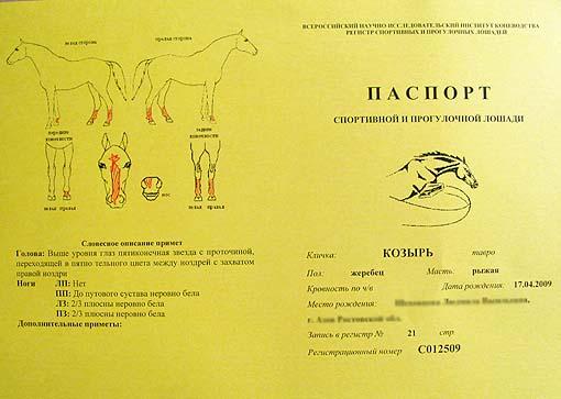 паспорт лошади бланк скачать