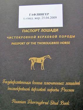 Как сделать паспорта на лошадей 201