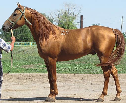 масть и отметины лошади,